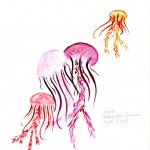 Monterey Bay Jellyfish by Sylvia Schaefer
